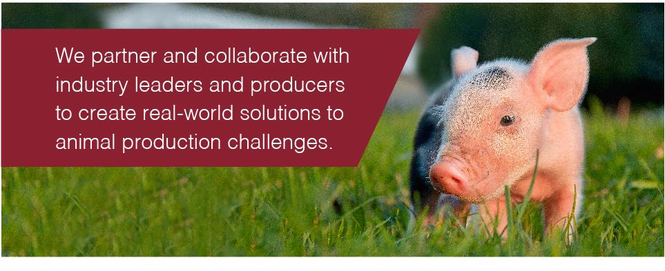 We partner and collaborate with industry leaders and producers to create real-world solutions to animal production challenges.